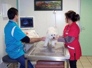 echographie-clinique-veterinaire-beaugency