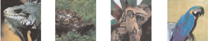identification-1